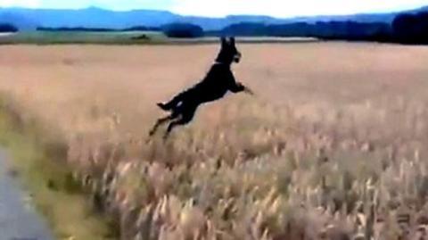 Dies ist der glücklichste Hund der Welt und zeigt dies auch.