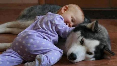 Dieses Baby lernt den Siberian Husky gerade zum ersten Mal kennen. So goldig, denn gleich...
