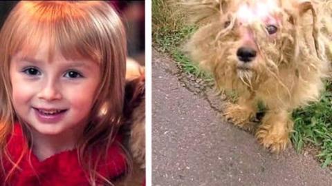 Ein kleines Mädchen rettet einen Hund davor ausgesetzt zu werden.