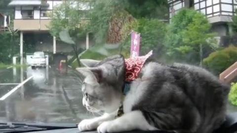 Diese Katze kämpft mit dem Scheibenwischer