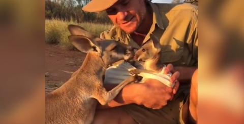 Ein Känguru-Baby wird unter dem aufmerksamen Blick seiner Mama mit dem Fläschchen gefüttert
