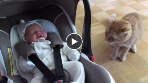 Diese Katze trifft zum ersten Mal auf dieses Baby. Ihre Reaktion ist wirklich überraschend!