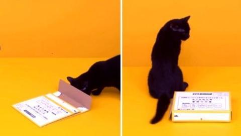 Eine Katze baut eine Papierbox zusammen