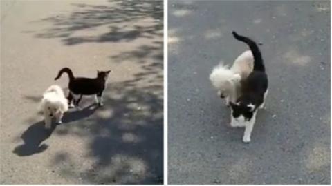 Kamera filmt herzergreifende Szene zwischen Katze und blindem Hund