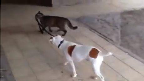 Dieser Hund wird gerne spazieren geführt. Und mit dieser Katze wird er nicht enttäuscht sein.