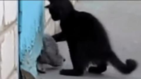 Dieser Hund war in einem Loch eingeklemmt. Glücklicherweise kam ihm diese Katze zu Hilfe.