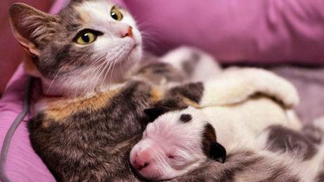 Eine Katze kümmert sich um einen kleinen Welpen.