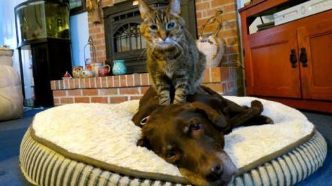Hier massiert die Katze den Hund des Hauses... und dieser scheint es zu genießen!