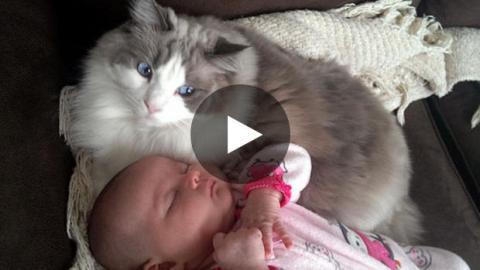 Diese Katze schützt ein Baby vor Schlägen.