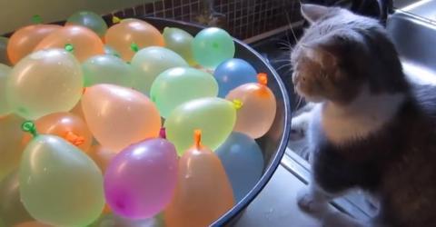 Kätzchen gegen Eimer voller Wasserbomben: Das Ergebnis ist zuckersüß!
