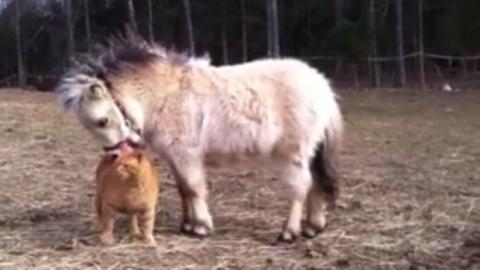 Eine Katze und ein Pony stehen sich nah.