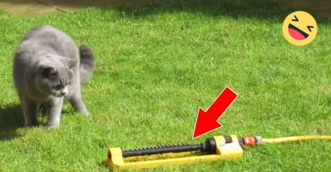 Schaut euch die Reaktion der Katze an, als die Sprinkleranlage losgeht!