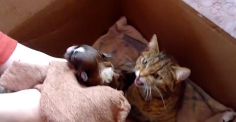 Sie übergibt den Welpen einer Katzenmama - ihre Reaktion macht sprachlos