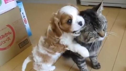 Die Katze ist vor allem sehr geduldig mit dem kleinen Welpen