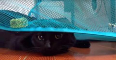 Besitzer filmt die geniale Reaktion seiner Katze auf einen Wäschekorb