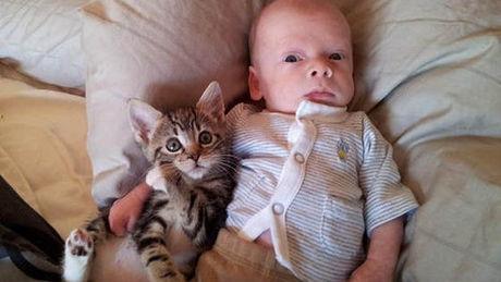 Diese Katze hat wirklich eine große Geduld. Sie werden es nicht glauben können.