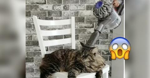 Sie möchte ihren neuen Staubsauger ausprobieren. Die Reaktion der Katze kommt allerdings gänzlich unerwartet!