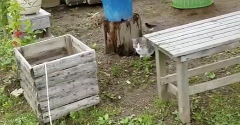 Sie ist ganz neugierig auf die Holzkiste, doch gleich passiert etwas Witziges!