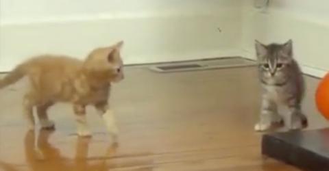 Womit diese Katzen spielen, ist absolut unverantwortlich