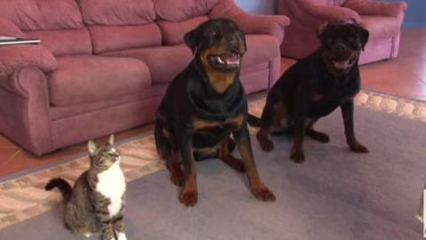 Hunde sind sehr gut erzogen... aber die Katze auch!