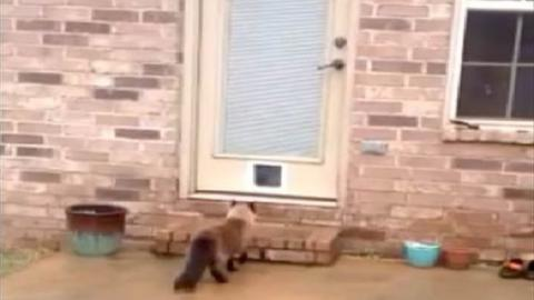 Er braucht über eine Stunde, um eine Katzenklappe anzubringen... und schaut euch die Reaktion der Katze an!