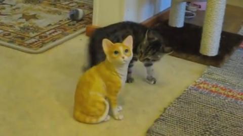 Dieses Kätzchen reagiert erstaunlich angesichts dieser lebensgroßen Katzenstatue. Sie ist total überrascht.