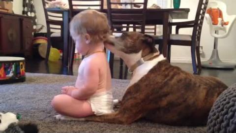 Dieses kleine Mädchen hat eine besondere Beziehung zu diesem Hund. Sie werden erstaunt sein.