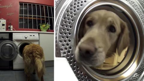 Dieser Hund rettet sein Kuscheltier aus der Waschmaschine.