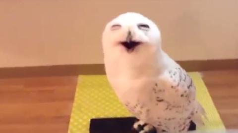 Eine Eule mit einem ansteckenden Lachen!
