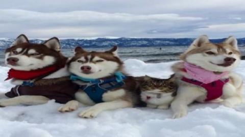 Diese Katze wurde von einem Husky gerettet und hat so eine neue Familie gefunden