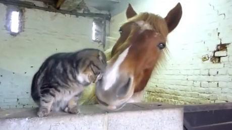 Diese Katze und dieses Pferd sind unzertrennlich. Eine ungewöhnliche Freundschaft.
