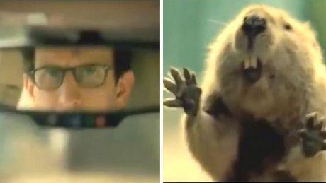 Manchmal sind es auch Tiere, die das Leben der Menschen retten. Der Beweis im Video.