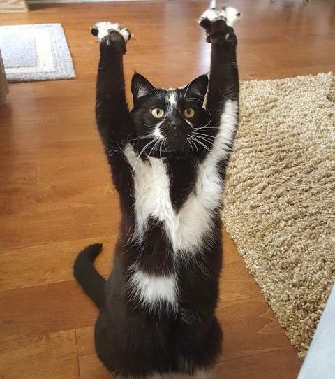 Katze Leukozyten Sehr Hoch