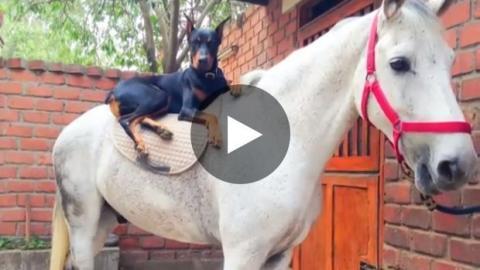 Die Geschichte einer unglaublichen Freundschaft zwischen einem Hund und einem Pferd.
