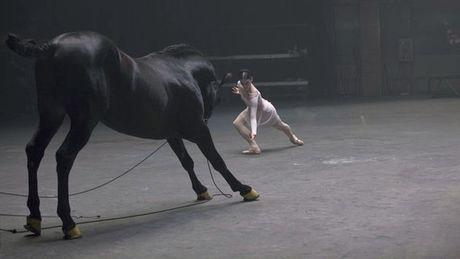 Pferde sind wie Menschen. Der Beweis im Video.
