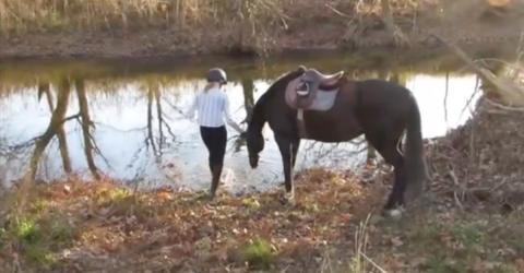 Scheues Pferd: Als es endlich ins Wasser geht, sorgt es für große Lacher (Video)
