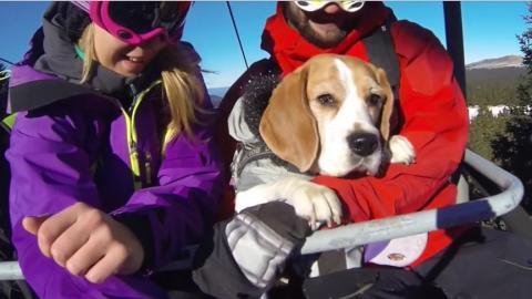 Dieser Hund liebt Schnee und zieht sein Herrchen über die Piste