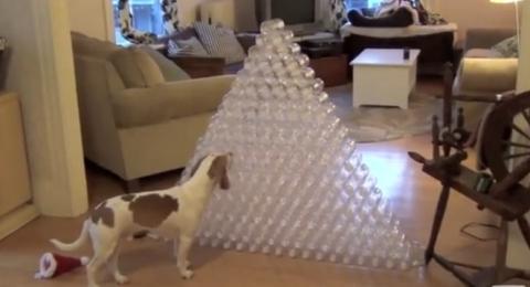 Dieser Hund bekam ein unglaubliches Weihnachtsgeschenk. Und er beschloss sofort, damit zu spielen!