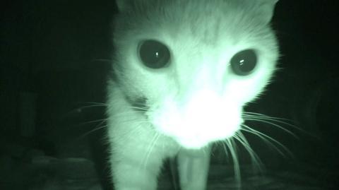 """""""Purranormal Cativity"""": Was Katzen eigentlich wirklich in der Nacht tun"""