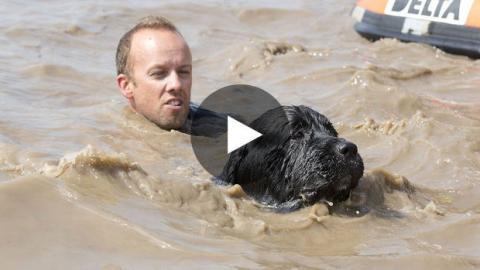 Dieser Mann gibt vor, in einem See zu ertrinken. Sehen Sie sich die unglaubliche Reaktion seines Hundes an!