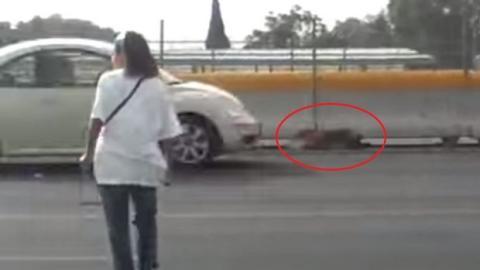 Zur Rettung eines Hundes hat diese Frau ihr Leben in Gefahr gebracht. Sie war absolut heldenhaft.