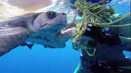 Die berührende Reaktion einer Schildkröte, nachdem sie von einem Taucher gerettet wurde.