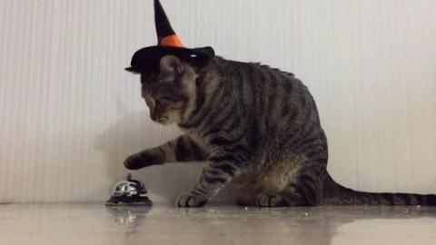 Diese Katze weiß, dass sie klingeln muss, um Kroketten zu bekommen
