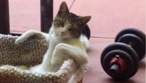Die einzige Katze auf der Welt, die so sitzt wie ein menschliches Wesen