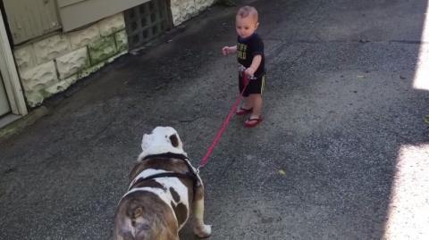 Ein kleiner Junge möchte mit seinem Hund spazieren gehen. Aber die Bulldogge ist stur.