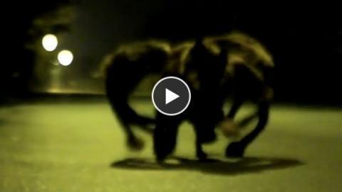 Dieser Hund, als mutierte Spinne verkleidet, erschreckt die Passanten. Eine versteckte Kamera mit Gruselfaktor!