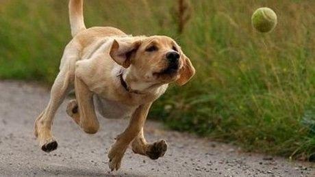 Was dieser Hund mit einem Ball macht, ist sehr beeindruckend.