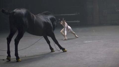 Pferde sind wie Menschen. Hier ist der Beweis.