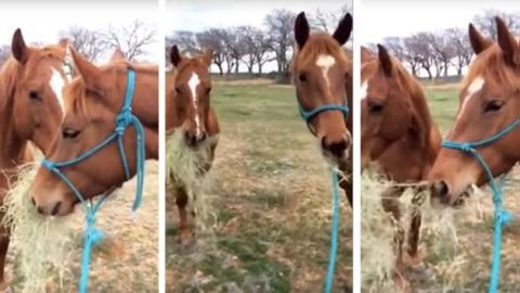 Dieses Pferd teilt gerne sein Essen