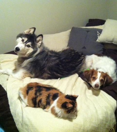 Ein Tier Im Bett